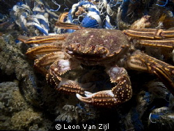 Crab on a rope :-D by Leon Van Zijl